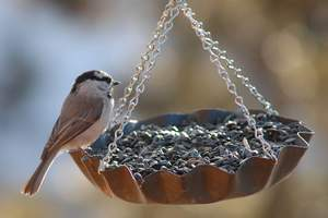Corrugated plate cake pan Homemade DIY bird feeder