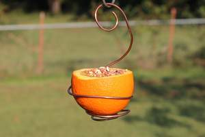 Easy orange bird feeder