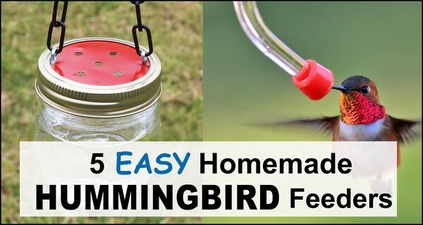 Homemade Hummingbird Feeders (5 EASY DIY Ideas)