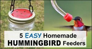 Homemade Hummingbird Feeders