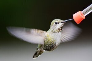 homemade hummingbird feeder tube