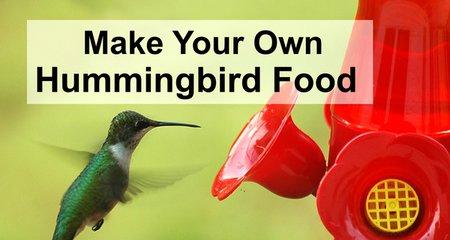 Homemade Hummingbird Nectar - DIY sugar water ratio for the best hummingbird food.
