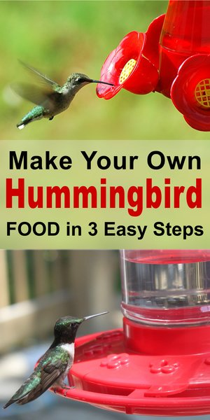 Homemade Hummingbird Nectar - DIY sugar water ratio for the best hummingbird food.