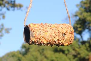 Recycled toilet paper roll bird feeder