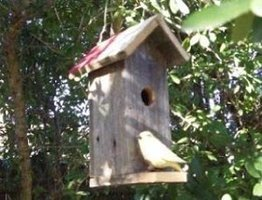 The tall Texan birdhouse plans