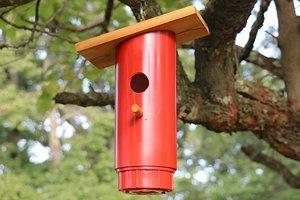 Blue Bird Nest Box Plans (Approved PVC Birdhouse Design)