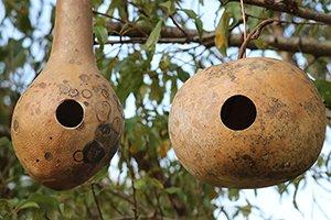 How to Build a Gourd Birdhouse - DIY Plans to create a Homemade bird house nesting box.