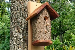 Plans and video to create a bird house from a natural log.