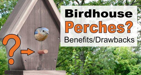 Birdhouse Perch (Do Birdhouses Need Perches): Benefits & Drawbacks