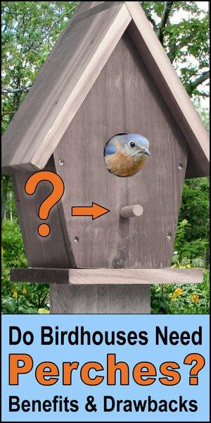 Birdhouse perch.  Do birdhouses need perches.  Advantages, disadvantages, length, placement of a perch, bird house porch.