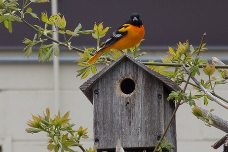 Bird wildlife spring.