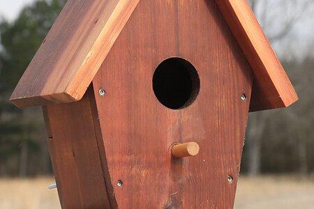 Birdhouse round perch wooden dowel.