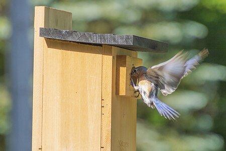 Bluebird birdhouse.