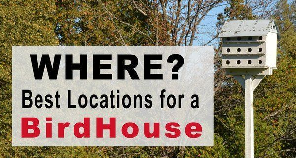 How to Hang a Birdhouse: Tips on Location, Mounting, & Placement