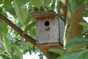 Concealed Birdhouse or nesting box.