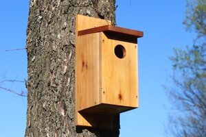 Mount a birdhouse to a tree.