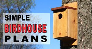 Simple Bird House Plans.