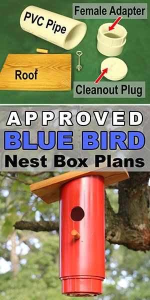 Free Easy DIY PVC Blue Bird Nest Box Plans for backyard or garden. Attract bluebirds, swallow, chickadees, nuthatches, warblers, woodpeckers, and wrens.
