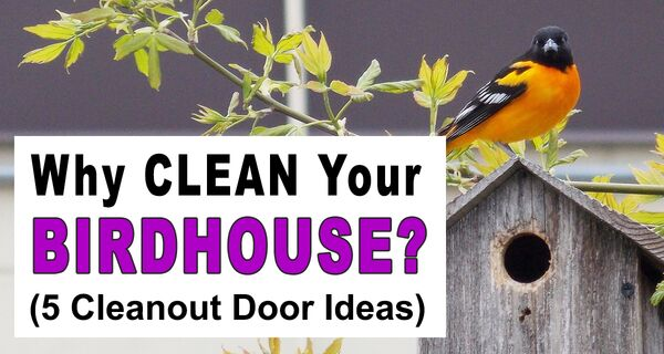 How to Clean a Bird House (Including 5 Cleanout Door Ideas)