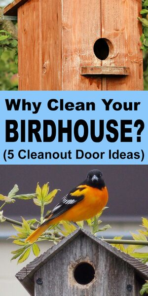 How, Why, and When to Clean out birdhouses and next boxes. DIY Cleanout doors ideas.