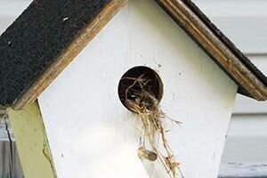 How to clean out a bird house or next box.