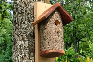 Hanging or mounted bird house created from natural log.