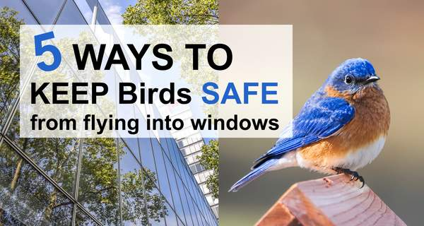 How to stop birds from flying into windows.  Why birds collide with windows.  Ways to prevent bird strikes and keep birds from crashing hitting glass using decals, stickers, wind chimes.