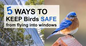 Stop Birds from Flying into Windows.