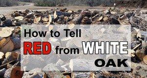 Easily Tell Red Oak vs White Oak