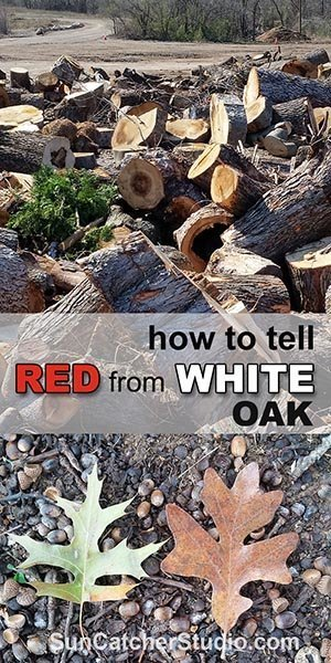 How to tell red oak and white oak by looking at the leaves, bark, grain.