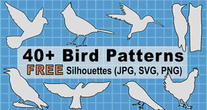 Bird Patterns and Stencils.