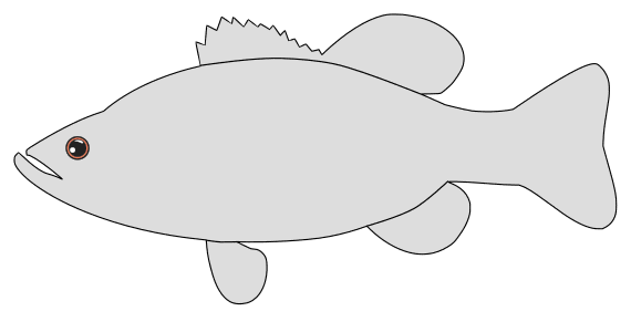 Free Bass Fish Pattern template, stencil, clipart design, printable pattern, vector, cricut, scroll saw, svg, coloring page, quilting pattern.