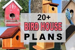 create your own bird house using these free plans.